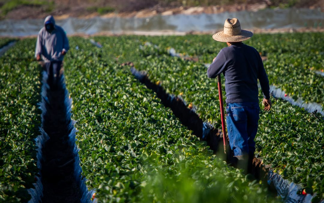 A New Deal for Farm Workers?